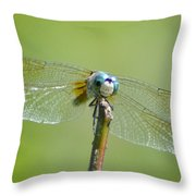 Old Blue Eyes - Blue Dragonfly Throw Pillow