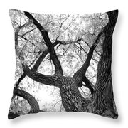 Old Cottonwood Tree Throw Pillow