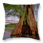 Old Cypress Trunk Throw Pillow