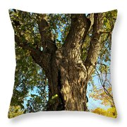 Old Elm Trunk In The Park Throw Pillow