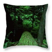 Old Growth Forest At Lost Lake On Mount Hood Throw Pillow