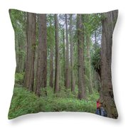 Old Growth Redwoods, Redwood National Park, California Throw Pillow by Paul Schultz