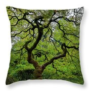 Old Japanese Maple Tree Throw Pillow