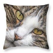 Old Kitty Throw Pillow