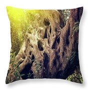 Old Sacred Olive Tree  Throw Pillow