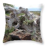 Old Stump At Gold Beach Oregon 4 Throw Pillow