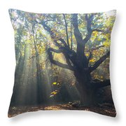 Old Tree And Sunbeams Throw Pillow