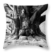 Old Tree Ground Up Throw Pillow