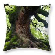 Old Tree In Kyoto Throw Pillow