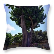 Old Tree In Palermo Throw Pillow