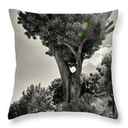 Old Tree In Sicily Throw Pillow