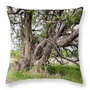 Old Weathered Tree Throw Pillow