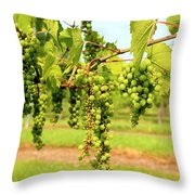 Old York Winery Grapes Throw Pillow