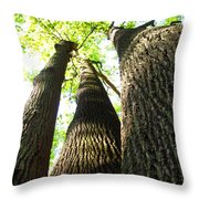 Oldgrowth Tulip Tree Throw Pillow