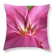 Oleander Maresciallo Graziani 3 Throw Pillow