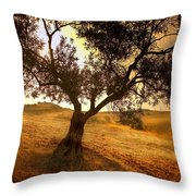 Olive Tree Dawn Throw Pillow