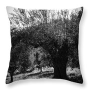Olive Trees In Italy 2 Throw Pillow