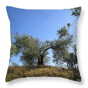 Olive Trees Near Olvera Throw Pillow