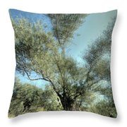 Olive Trees Throw Pillow