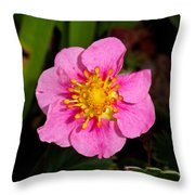 Olympia Pink Throw Pillow