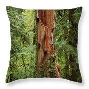 Olympic Rainforest #1 Throw Pillow