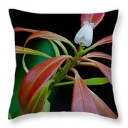 One Andromeda Throw Pillow