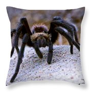 One Big Hairy Spider Throw Pillow