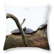 One Hiding Turtle Throw Pillow