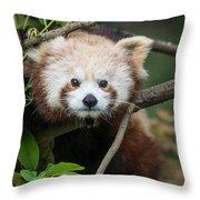 One Intense Critter Throw Pillow