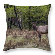One Last Glance Before I Go Throw Pillow