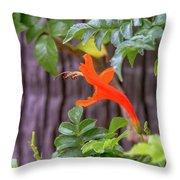 One Lone Flower Remains On The Cape Honeysuckle Throw Pillow