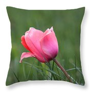 One Pink Tulip Throw Pillow