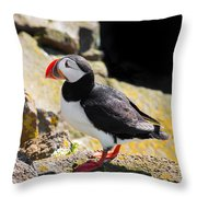 One Puffin In Iceland Throw Pillow