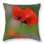 One Red Poppy Throw Pillow
