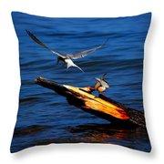 One Tern Flight Throw Pillow by Amanda Struz