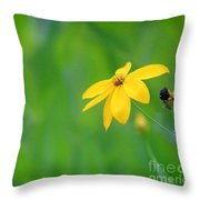 One Yellow Coreopsis Flower Throw Pillow