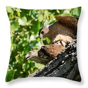 Cooper's Hawks Mating Throw Pillow