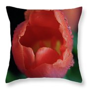 Opened Tulip Throw Pillow by Tracy Hall