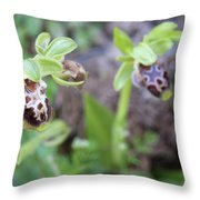 Ophrys Kotschyi Wild Orchid Plant. Throw Pillow