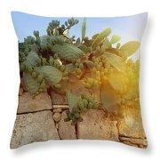 Opuntia Cactus In The Sunset Throw Pillow