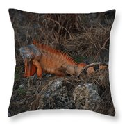 Oranage Iguana Throw Pillow