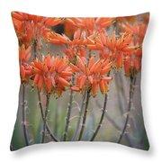 Orange Aloe  Throw Pillow
