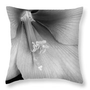 Orange Amaryllis Hippeastrum Bloom 12-29-10 Bw Throw Pillow