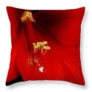 Orange Amaryllis Hippeastrum Bloom 12-29-10 Throw Pillow
