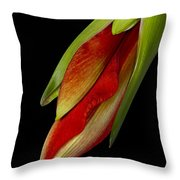 Orange Amaryllis Hippeastrum In The Beginning 2-21-10 Throw Pillow