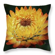 Orange And Yellow Strawflower Throw Pillow