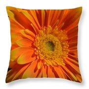 Orange And Yellow Tip Gerbera Daisy Throw Pillow