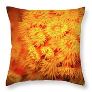 Orange Anemones Throw Pillow