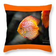Orange Aquarium Fish In Zoo Throw Pillow