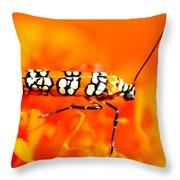 Orange Beetle On Orange Flower Throw Pillow